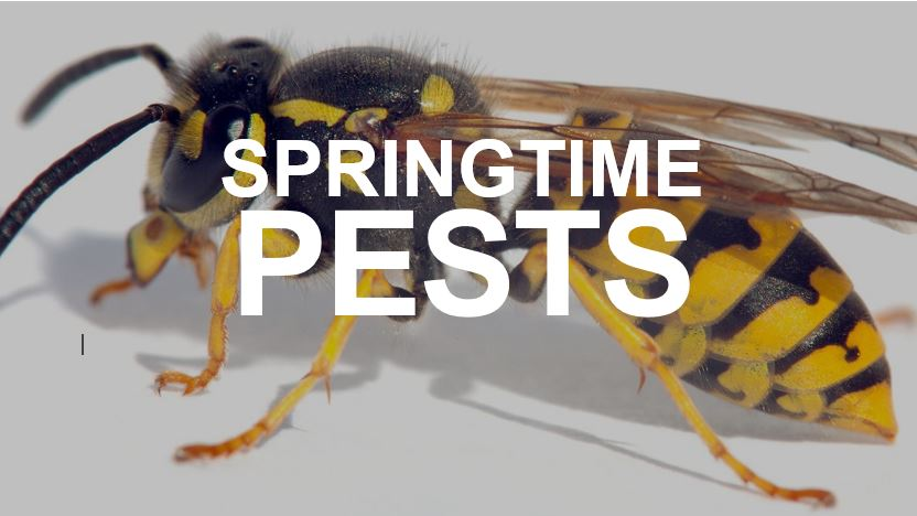 Apex Pest Control Services on spring pests