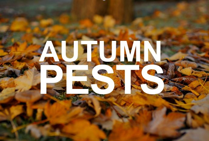 Apex Pest Control tips on autumn pests