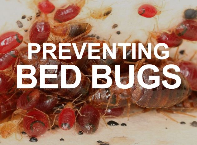 Apex Pest Control about bed bugs