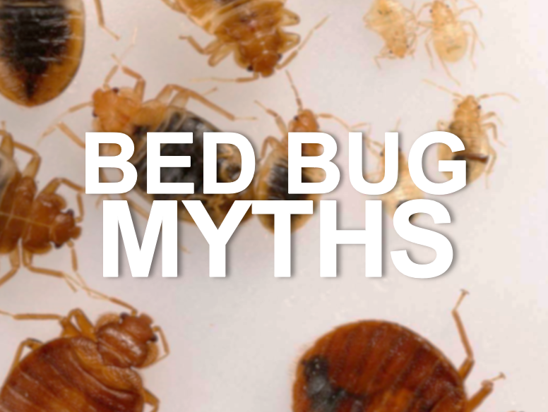 Myths about bed bugs by Apex Pest Control